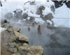Snow monkeys in Japan, keeping warm in the hot springs